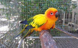 BirdTradingPlaces