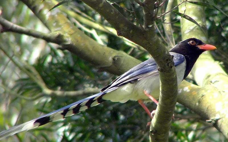 Birdmagpie