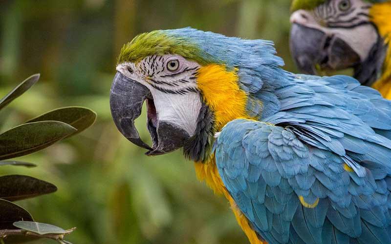Parrotspecies-