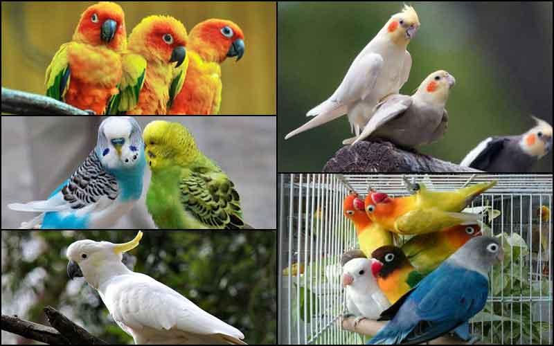TOP 5 นกสวยงาม ที่น่าเลี้ยงมากที่สุดในปีนี้