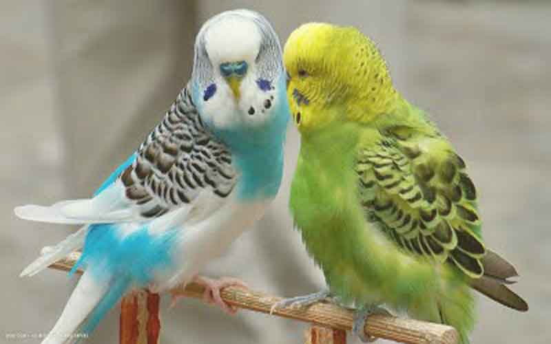 TOP-5-beautiful-birds-one