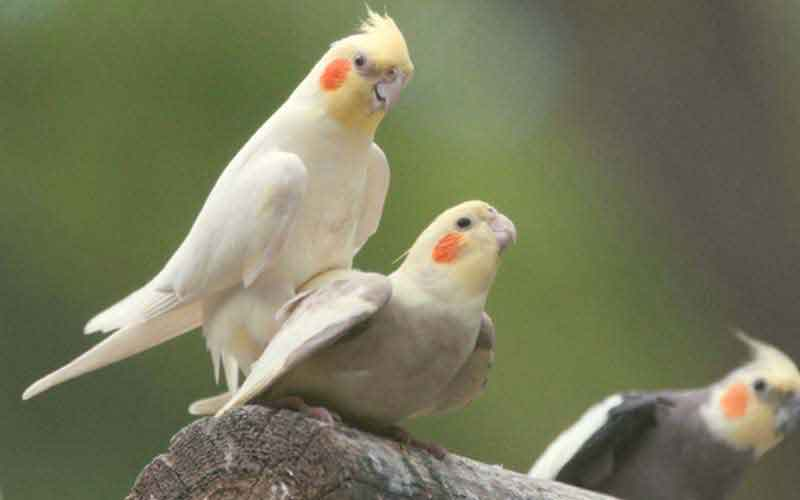 TOP-5-beautiful-birds-two
