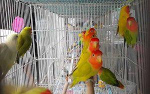 BirdTradingPlaces-