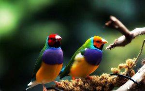 Birdcharms-