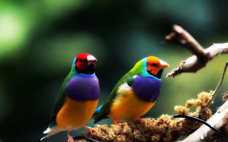 เสน่ห์ของนกสวยงามในประเทศไทย