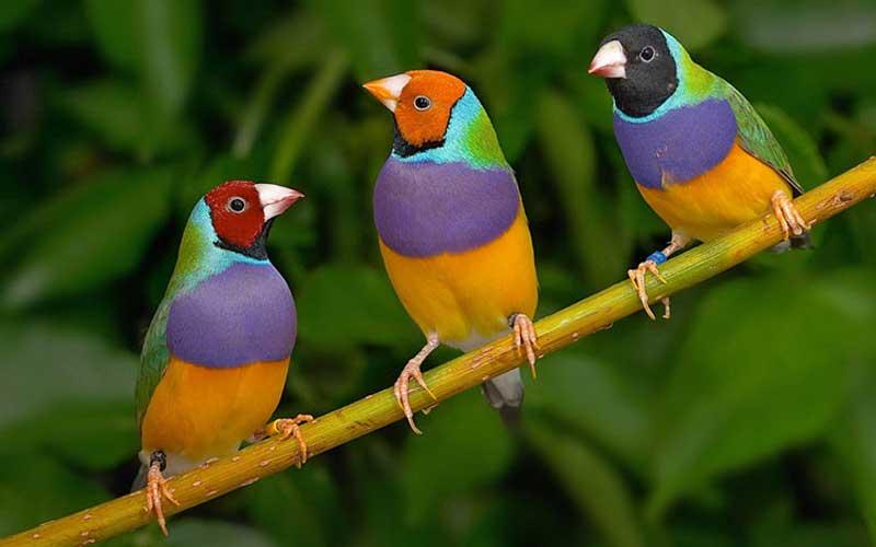 Birdcharms