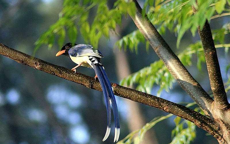 Birdmagpie-