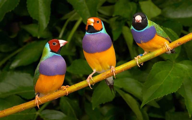 FinchBird-