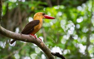 Kingfisher-