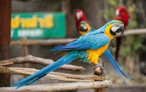 Parrotspecies