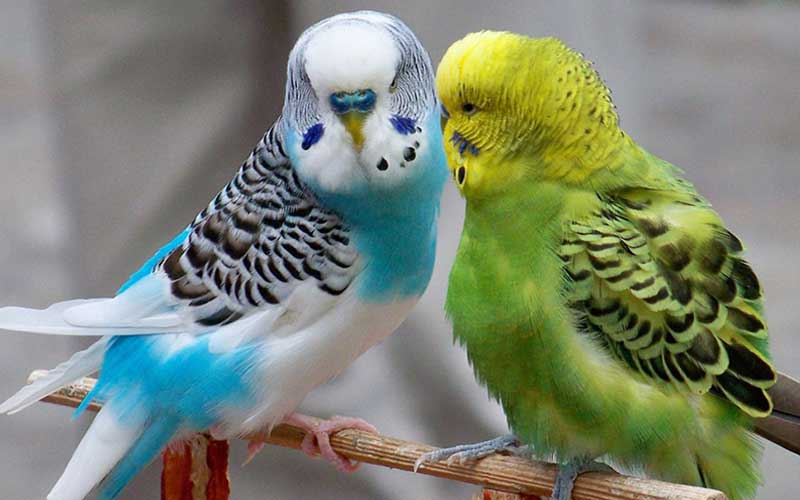 Thebeautifulbirds