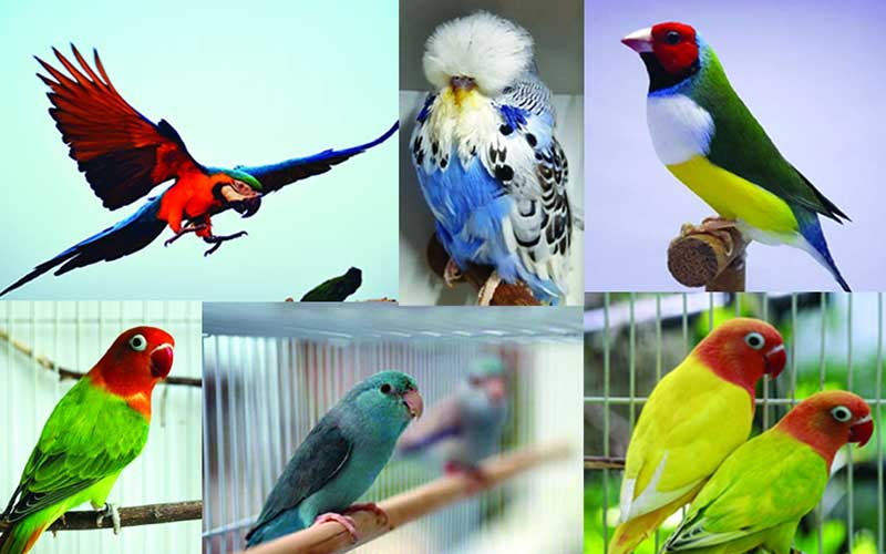 ชนิดของนกสวยงามที่นิยมเลี้ยงกัน