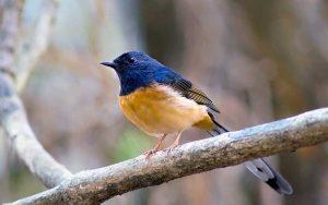 Wildbirds-