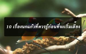 10-things-to-know-about-parrots-news-site