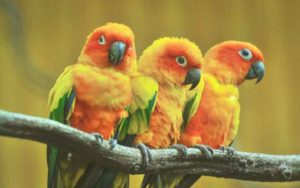 TOP-5-beautiful-birds-five
