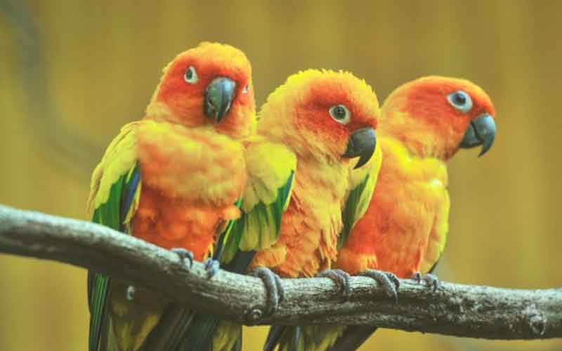 TOP-5-beautiful-birds-five