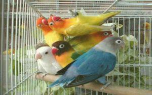 TOP-5-beautiful-birds-four