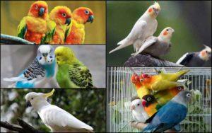 TOP-5-beautiful-birds-news-site